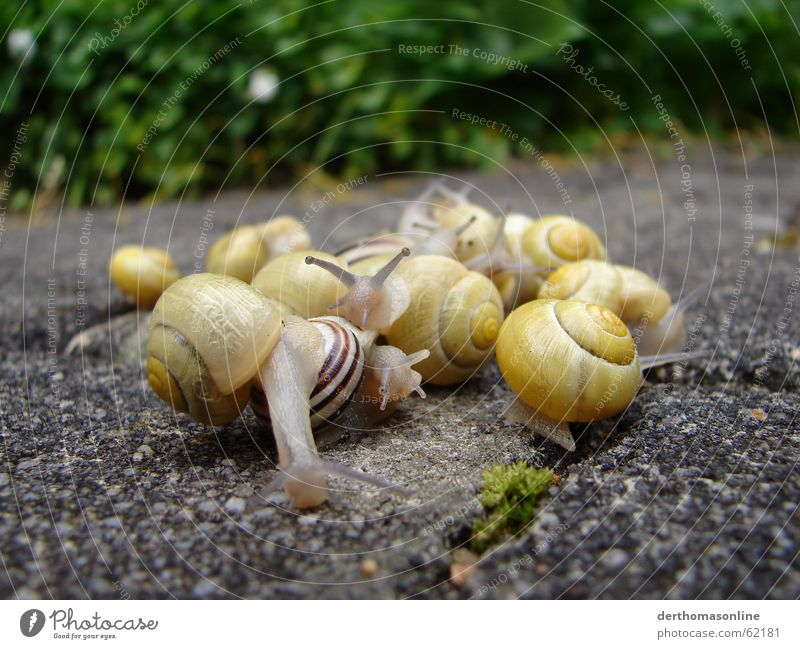 House (Residential Structure) Eyes Yellow Earth Multiple Floor covering Group of animals Many Observe Thin Pallid Audience Disgust Smoothness Snail Vessel