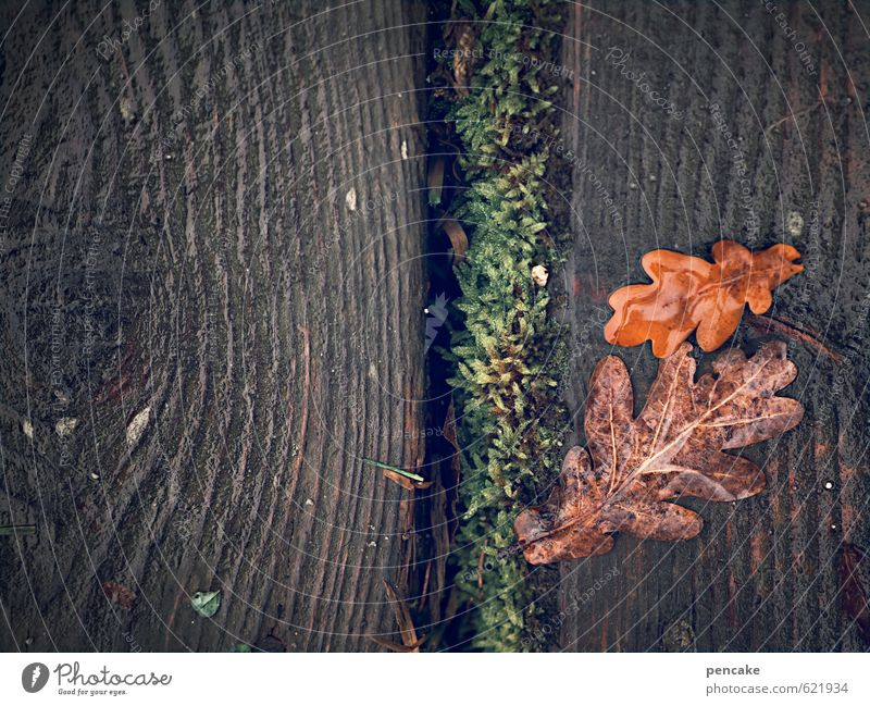 Nature Green Red Landscape Leaf Winter Dark Autumn Natural Feminine Wood Earth Authentic Esthetic Wet Simple