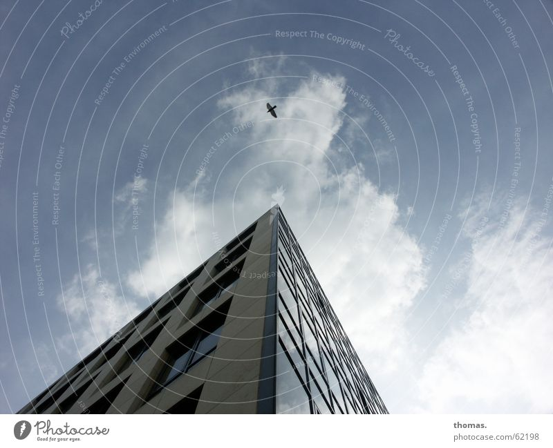 Sky House (Residential Structure) Clouds Window Bird High-rise Simple Cologne Great Absurdity Simplistic Recently