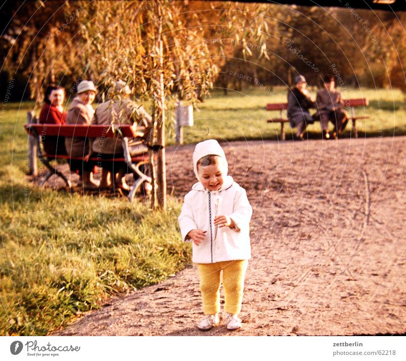 Very early III Child Toddler Dandelion Senior citizen Park bench Sixties Boy (child) old photo