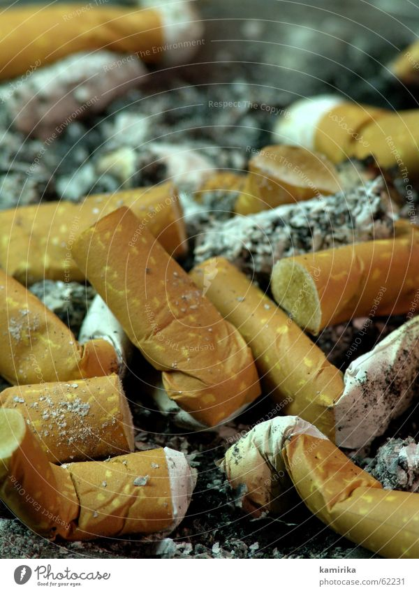 [topography] Cigarette Smoking Smoke Ashtray taste stew puffed Filter Ashes Feasts & Celebrations Cigarette Butt