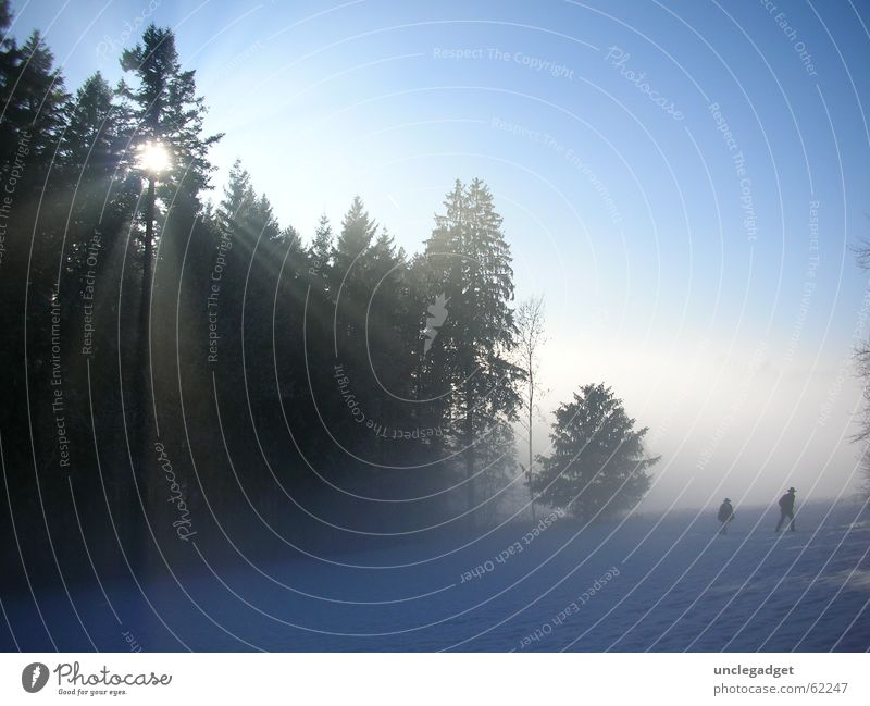 Tree Sun Blue Winter Forest Snow Power Hiking Fog Force Switzerland Fir tree Radiation Effort Snowscape Zurich