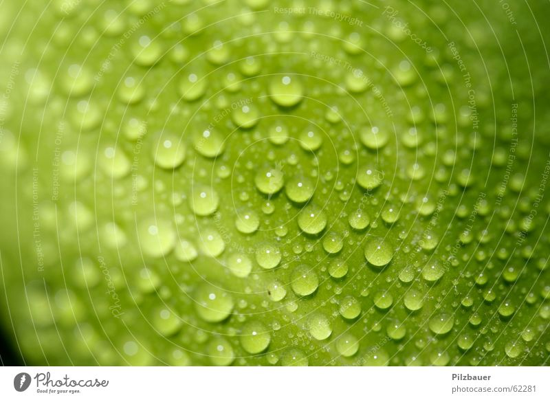 trickle Green Leaf Zoom effect Plant Drops of water Macro (Extreme close-up) Close-up Garden Nature
