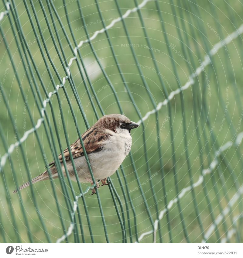 In the net, but free Grass Garden Park Meadow Paris France Fence Wire fence Animal Wild animal Bird Sparrow 1 Metal Line Net Network Crouch Brash Free Cold