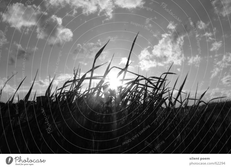 just black and white Black White Clouds Grass Sun Landscape