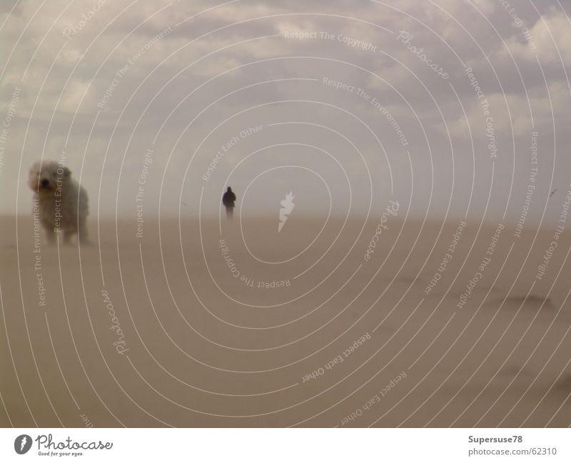 Human being Man Beach Clouds Animal Dog Sand Wind Gale