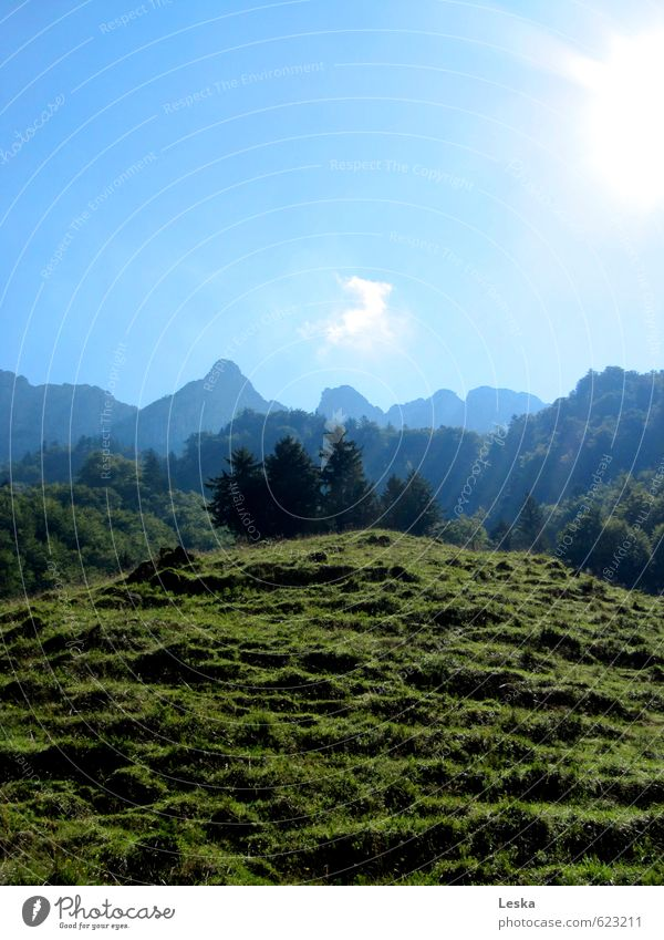 Mountain worlds 2 Nature Landscape Plant Earth Sky Sun Summer Beautiful weather Tree Grass Meadow Alps Peak Blue Green Far-off places Intimacy Colour photo