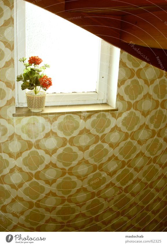 Old Flower Style Window Germany Retro Kitsch Decoration Idyll Trashy Hallway Hip & trendy Staircase (Hallway) Seventies Cliche Bremen