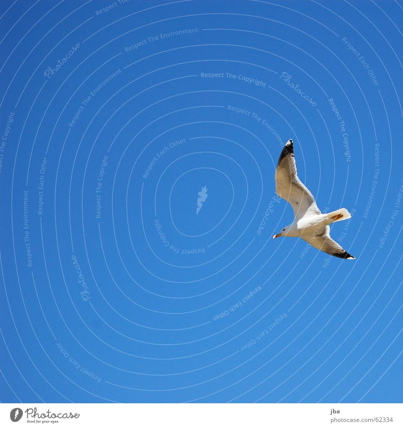 glide Glide Glider flight Beautiful Seagull Tails Animal Beak Time Flying Aviation Freedom Room Sky Beautiful weather Blue Bluish Wing Feet Point