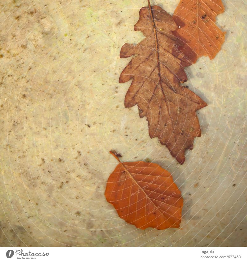 Still autumn Water Autumn Winter Plant Leaf Autumn leaves Sign Old To dry up Natural Dry Brown Gray Moody Style Environment Environmental pollution Transience