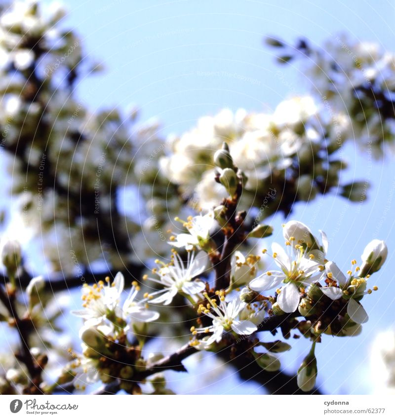 flower dream Blossom Tree Bushes Spring Seasons Discover Maturing time Joy Emotions Sky Detail Life Beautiful Nature natural Growth