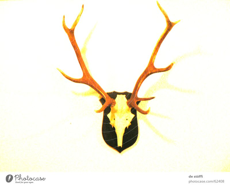 de hearing Deer Antlers Style Yellow Wall (building) Flat (apartment) Skeleton Contrast Colour Wall decoration Death yeah