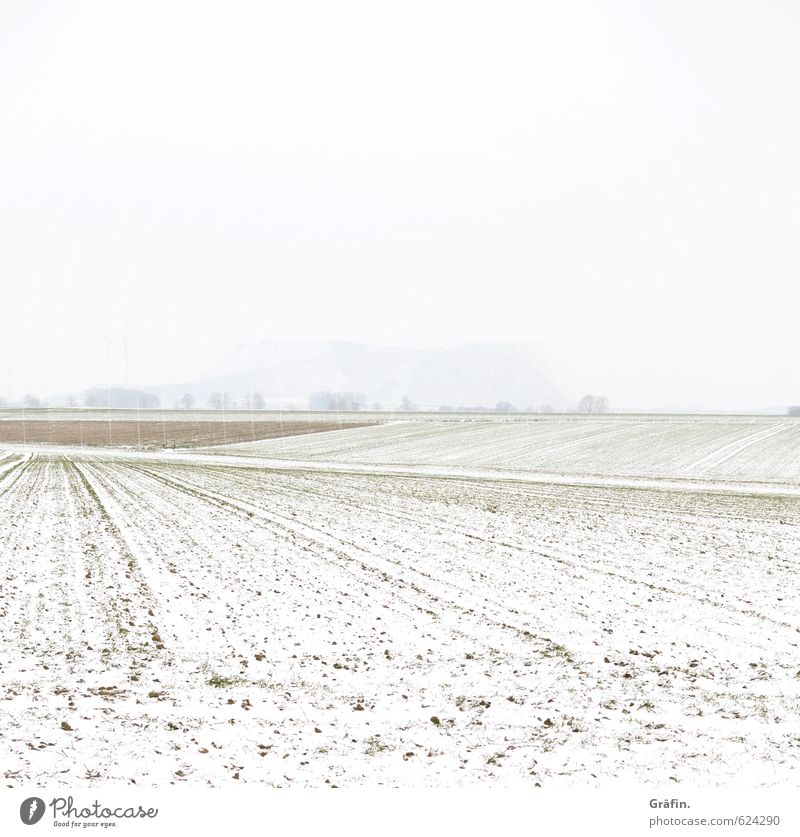 Weather cheerful to foggy Landscape Earth Winter Bad weather Fog Snow Field Hill Cold Brown White Loneliness Climate Nature Environment Invisible Colour photo