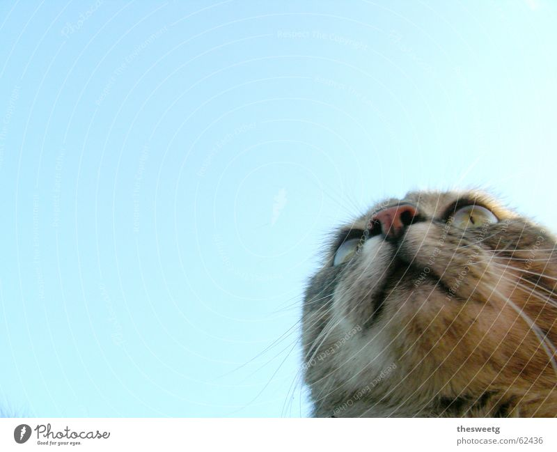 Sky Cat Funny Observe Animal face Pelt Hunting Comic Snout Animal Whisker Hypnotic Cat eyes Cat's head Goggle eyes Gaze