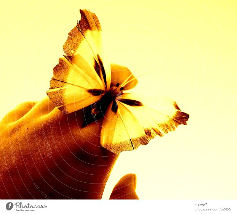 summerfeelings Butterfly Yellow Hand Fingers Summer Summer's day Wing butterfly wings Free Bright background Close-up