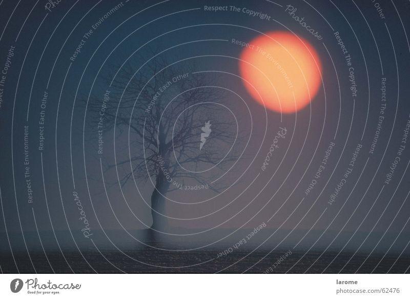 Tree Sun Moody