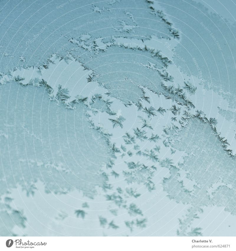 ice continents Elements Water Earth Winter Ice Frost Freeze Exceptional Sharp-edged Fantastic Firm Infinity Cold Blue Turquoise Calm Esthetic Bizarre Nature