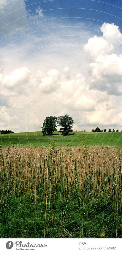 Two trees Clouds Grass Meadow Field Common Reed Green two trees Sky bavarian nature iffeldorf a few Blue