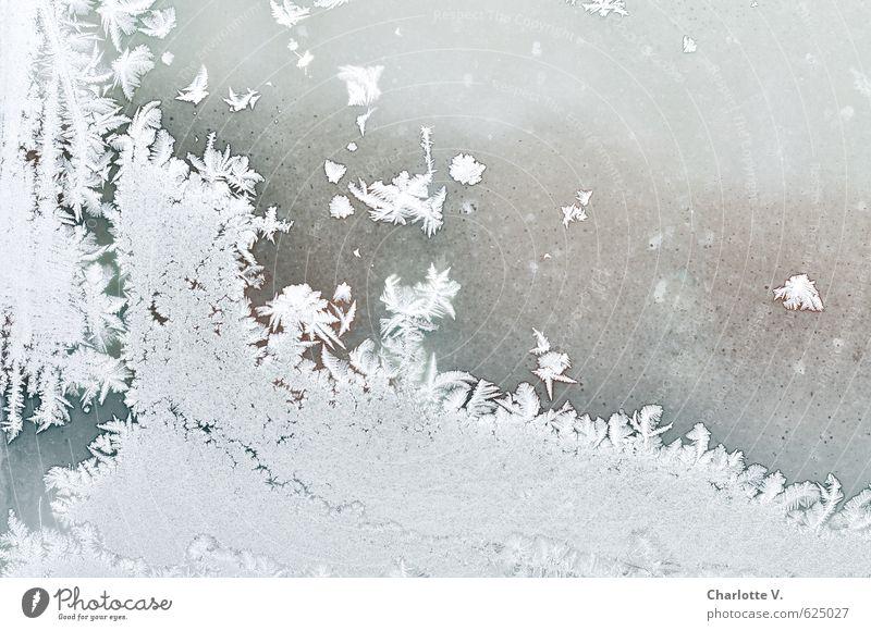 Nature Beautiful White Water Calm Winter Cold Window Gray Bright Snowfall Ice Elegant Illuminate Fresh Esthetic