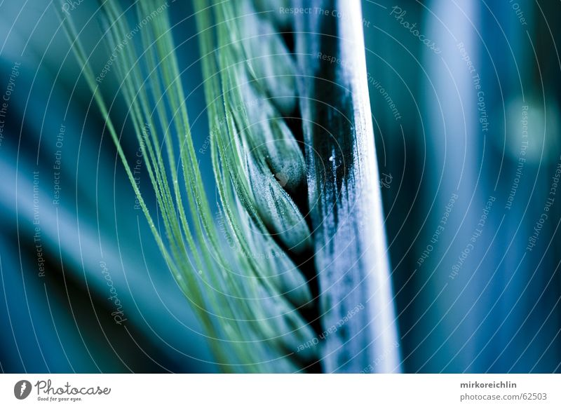grain Grain Grass Blade of grass Field Light Dark Mysterious Work and employment bigway Contrast Electricity