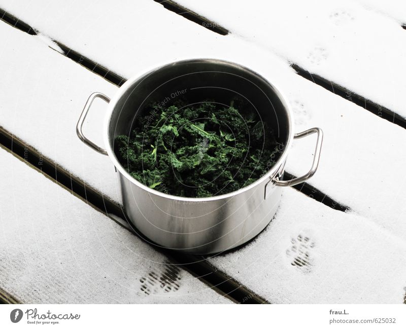 curly kale Food Eating Pot Healthy Eating Winter Snow Snowfall Balcony Paw Walking Stand Delicious Attentive Cold High-grade steel Cooking Dish Food photograph