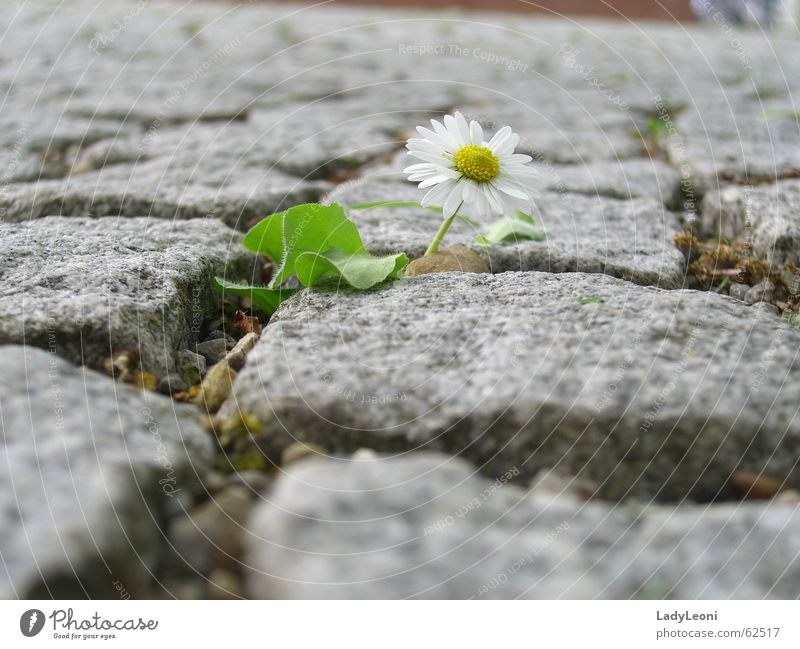 Nature Flower Stone Cobblestones