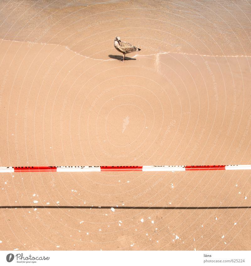 Do not cross l DO NOT CROSS Vacation & Travel Summer Summer vacation Sun Beach Ocean Waves Environment Nature Elements Sand Water Beautiful weather Coast