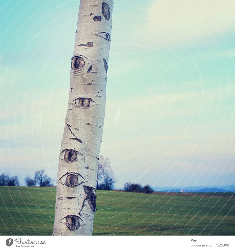 Mother Nature is watching you! Eyes Plant Sky Clouds Beautiful weather Tree Grass Tree trunk Birch tree Meadow Observe Blue Green Whimsical Colour photo