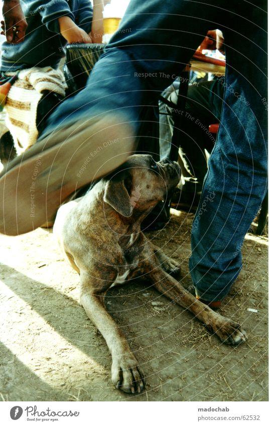 Man Blue Dog Joy Animal Movement Sand Brown Footwear Earth Dance Speed Jeans Dynamics Dust Music festival
