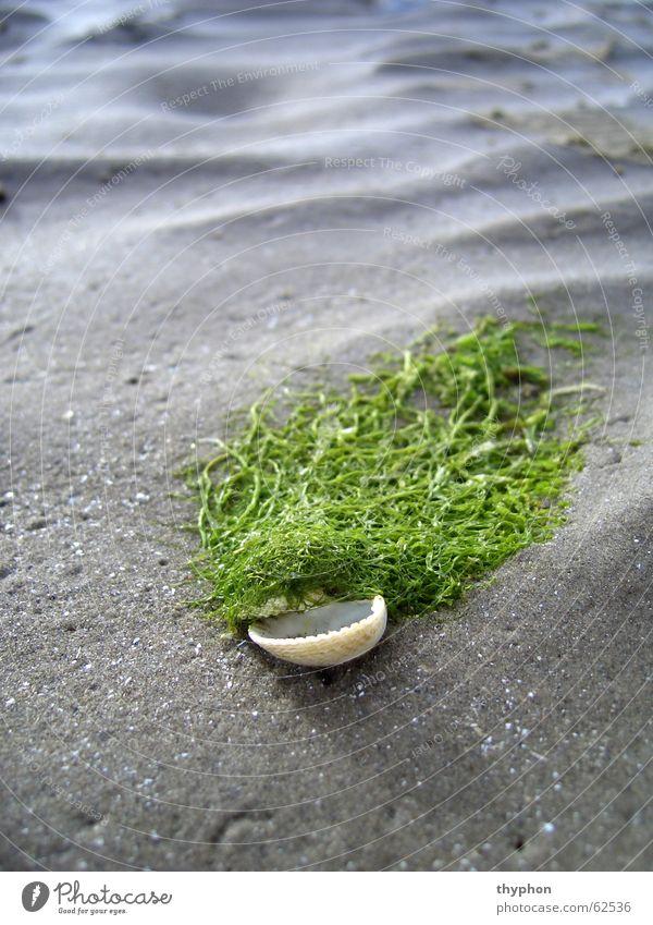 Ocean Green Beach Sand Waves Mussel Mud flats Ireland Algae Wig