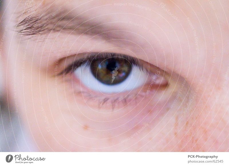 looked in Woman Skin color Blur Freckles Eyelash Eyebrow Mystic Pervasive Pink Complexion Mysterious Eyes Looking protrait Macro (Extreme close-up)