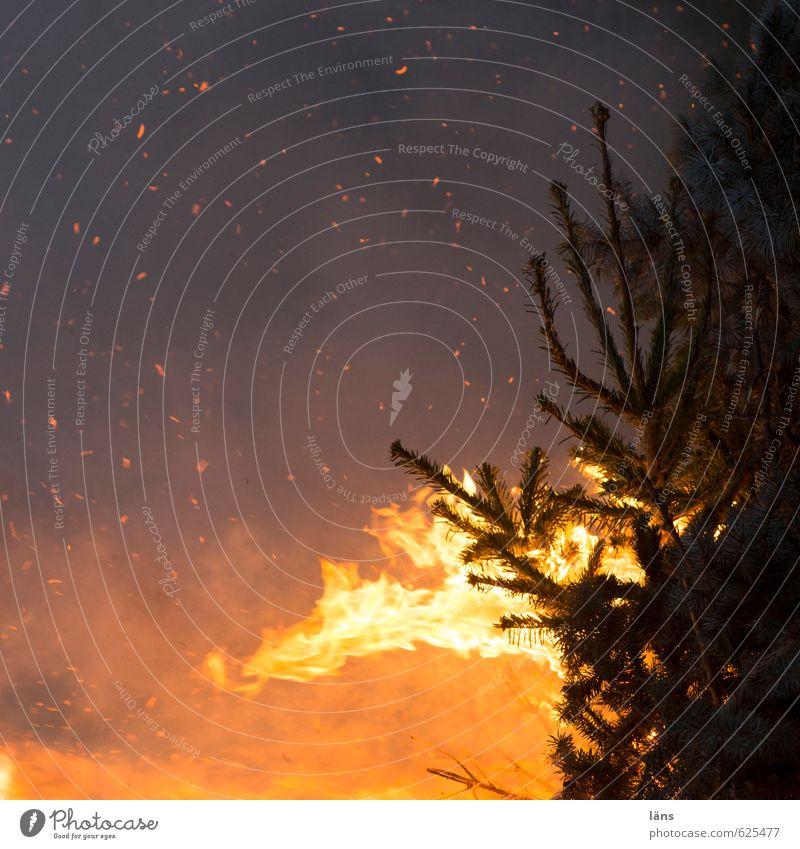 Illuminate Blaze Event Fir tree Burn Spark