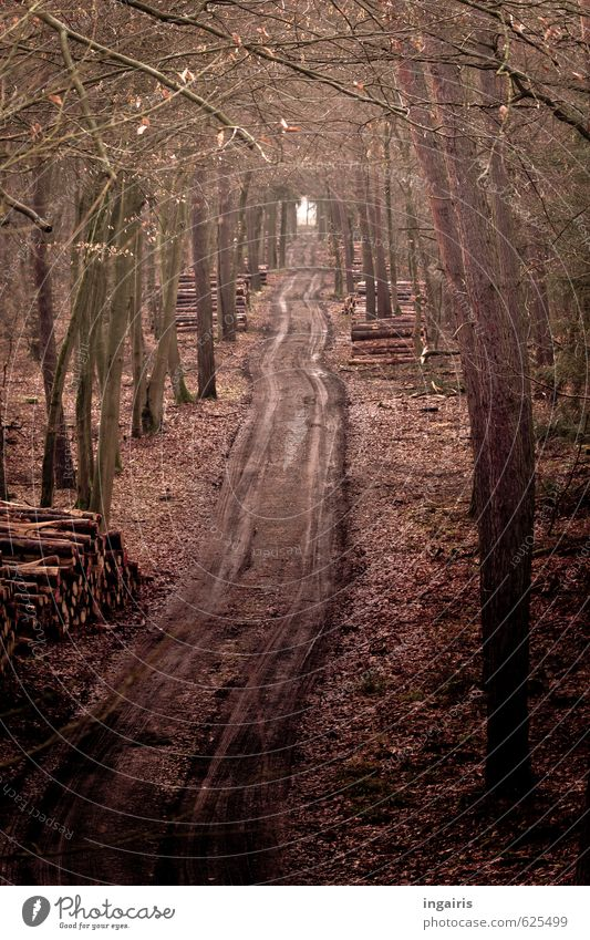 by hook or by crook Agriculture Forestry Nature Winter Tree Leaf Lanes & trails Footpath Wood Stack of wood Woodway Skid marks Tracks To dry up Dark Wet Natural