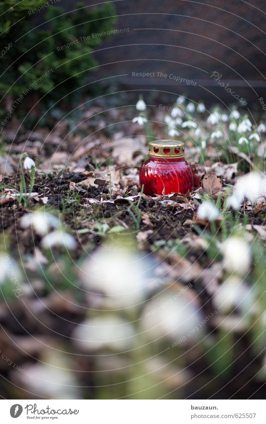 Plant Loneliness Red Flower Sadness Death Brown Illuminate Bushes Decoration Glass Candle Grief Pain Divide Cemetery