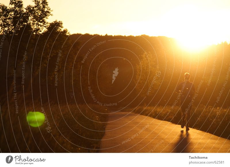 Jogging til Sunset Jogger Sports Summer Man Back-light Patch of light Physics Tree Meadow Insect Loneliness Grief Exterior shot Landscape Athletic Warmth