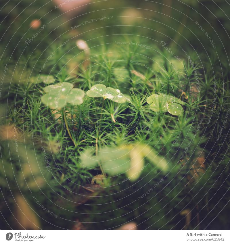 forest life Environment Nature Plant Summer Autumn Grass Leaf Clover Forest Natural Green Woodground Dew Subdued colour Exterior shot Close-up Detail Deserted