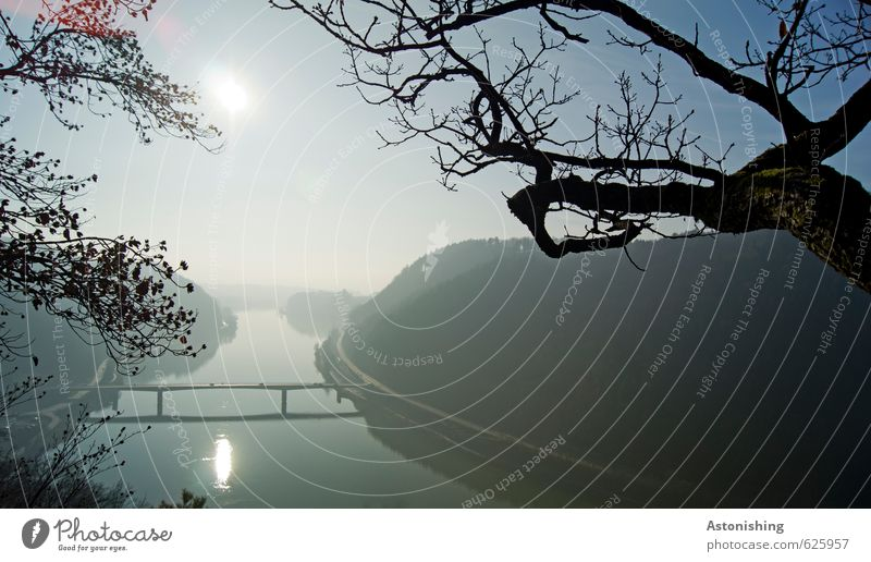 Danube Environment Nature Landscape Plant Air Water Sky Cloudless sky Horizon Sun Sunrise Sunset Autumn Weather Beautiful weather Tree Forest Hill River bank