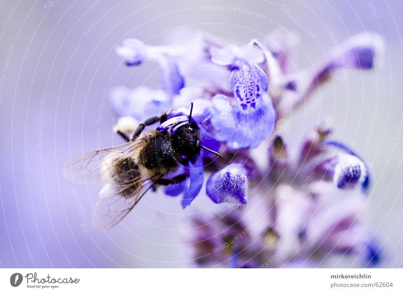 Nature Flower Blue Wing Bee Harmonious Wasps Symbiosis Clarify