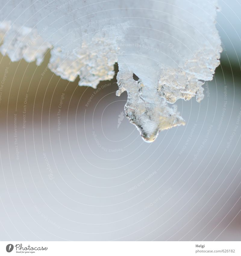 thawed Nature Elements Drops of water Winter Ice Frost Snow Hang Esthetic Authentic Simple Firm Fluid Wet Natural Gray White Moody Calm Bizarre Uniqueness