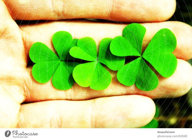 three-quarters happiness Happy Hand Fingers Plant Leaf To hold on Cloverleaf Sorrel Edible New Year's Eve New start Colour photo Multicoloured Exterior shot