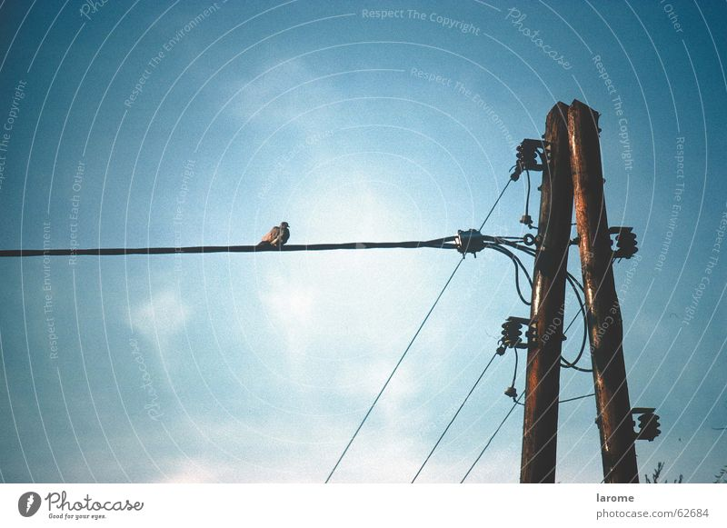 Sky Bird Energy industry Electricity Electricity pylon Transmission lines Insulator