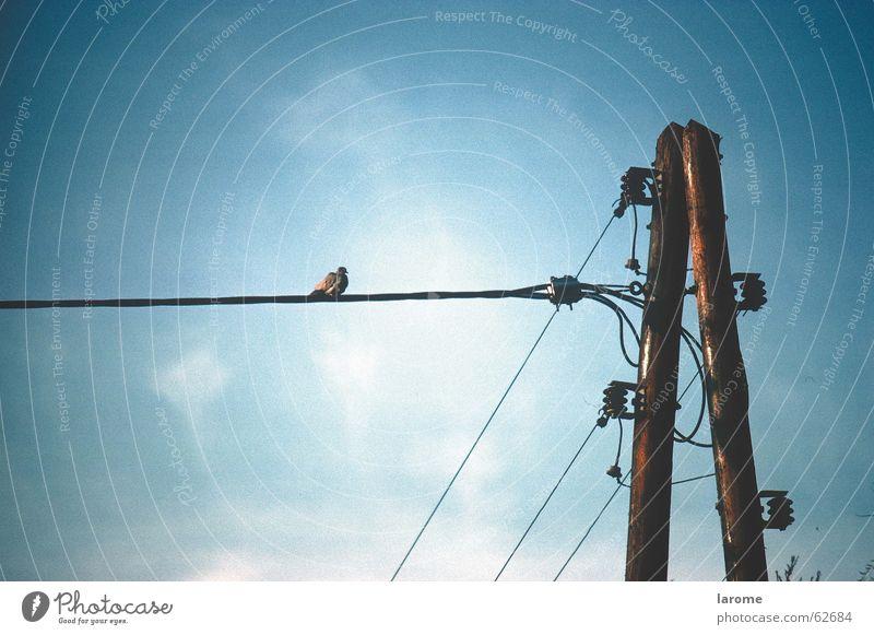 Sky Bird Energy industry Electricity Electricity pylon Transmission lines Insulator