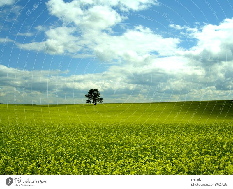 Nature Beautiful Sky Tree Green Clouds Yellow Meadow Spring Field Weather Pure Organic produce Canola Gasoline Bad weather