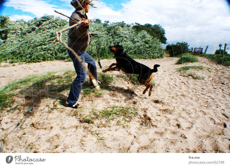 Get the piece. Dog Beach Stick Rottweiler Crossbreed Wide angle Throw Movement Playing Effortless Playful Retrieve Exterior shot Sandy beach Young man Pet