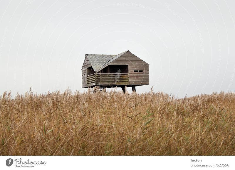 Nature Vacation & Travel Blue Plant Water Ocean Landscape Animal House (Residential Structure) Far-off places Winter Coast Wood Gray Brown Germany