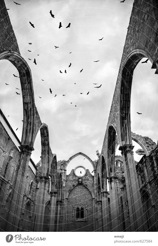 Sky Animal Dark Building Gray Exceptional Bird Threat Church Manmade structures Tourist Attraction Ruin Flock Motion picture