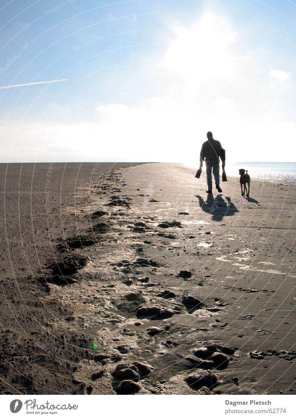 Water Sun Ocean Beach Freedom Dog Sand Coast North Sea Mud flats