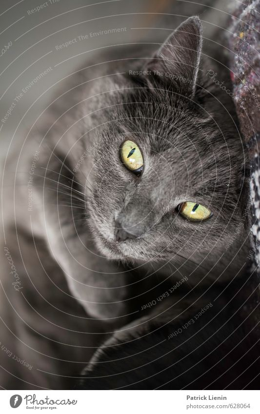 Pet Me Animal Cat Animal face 1 Esthetic Exceptional Brash Friendliness Happiness Healthy Beautiful Uniqueness Cuddly Funny Natural Cute Moody Colour photo