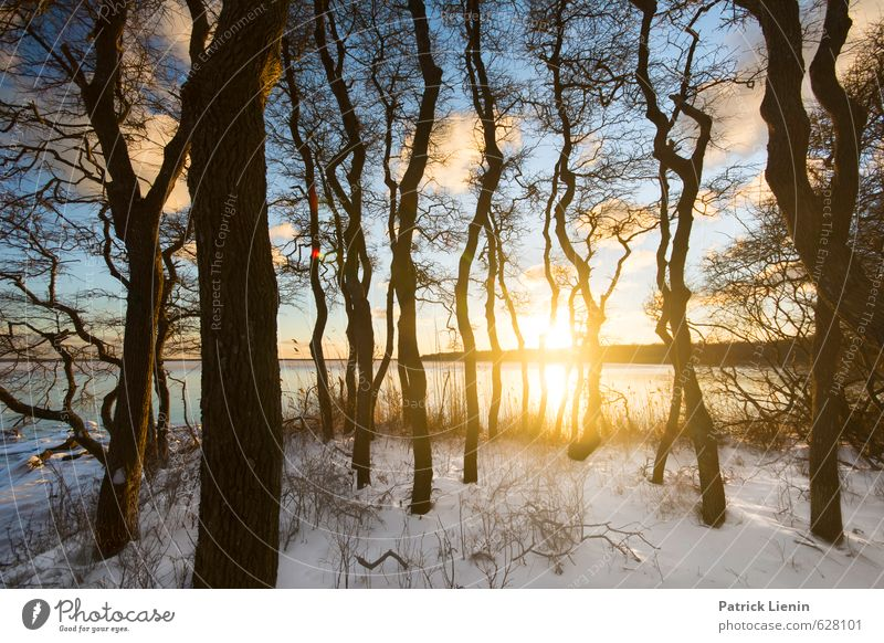 Secret Forest Environment Nature Landscape Elements Air Water Sky Clouds Sun Sunrise Sunset Sunlight Winter Weather Beautiful weather Ice Frost Snow Plant Tree