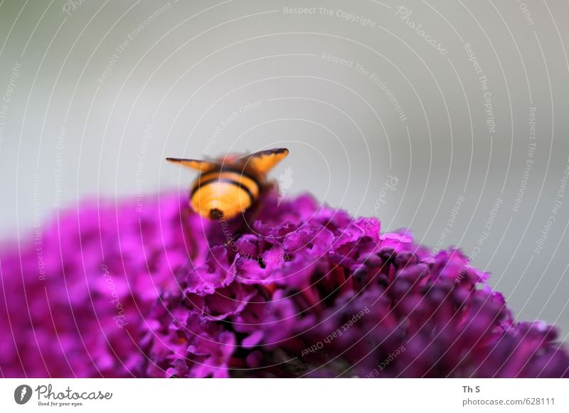 bee Bee 1 Animal Blossoming Esthetic Fragrance Near Natural Contentment Beautiful Peaceful Calm Authentic Freedom Nature Harmonious Spring Colour photo